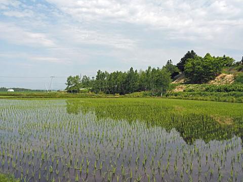 水田やそ他音更地区の畑