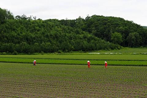 畑の作業風景