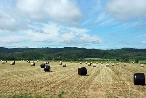 番牧草ロール