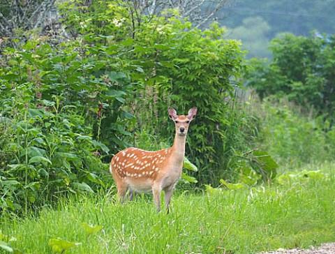 保護区は鹿の楽園