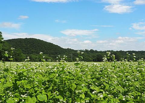 蕎麦畑の撮影は新得町で
