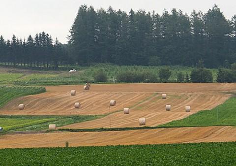 昨日の小麦ロールと今朝は草刈り