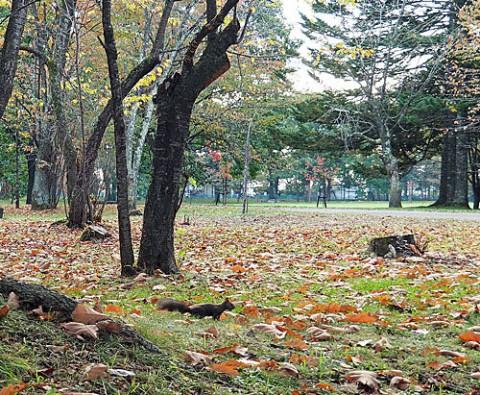 秋色のすずらん公園