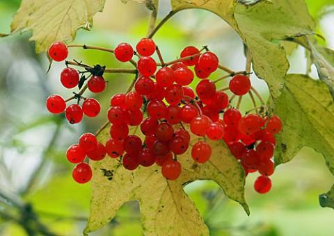 秋の木の実と野草の実5種