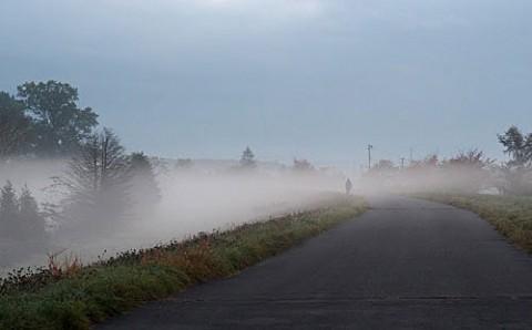 朝霧の朝の散歩