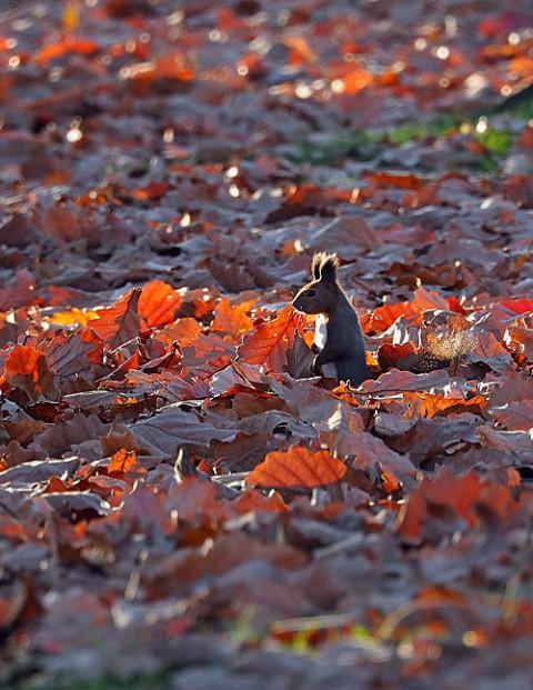 すずらん公園大量の落ち葉とリス