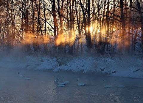 光芒と気嵐の中の白鳥
