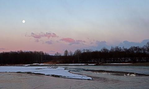 十勝川で朝の月と白鳥