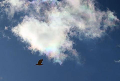 彩雲とオジロワシ