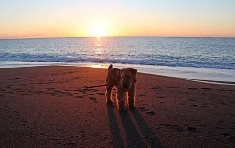 海で早朝散歩のエル