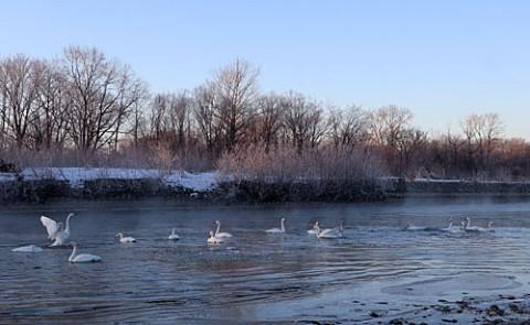 霧氷と気嵐の朝の白鳥