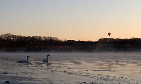 白鳥と熱気球