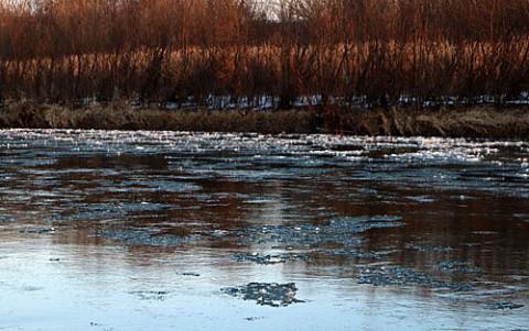蓮の葉氷は大津に流れ着くのか?