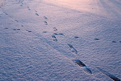 雪の朝の足跡