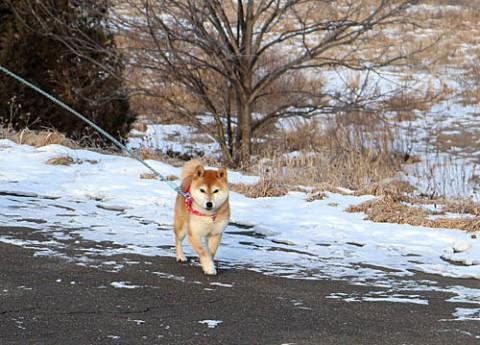 おお散歩ワンちゃん」