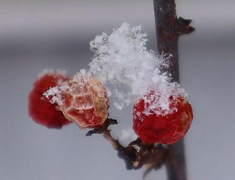 結晶の見える数センチの雪