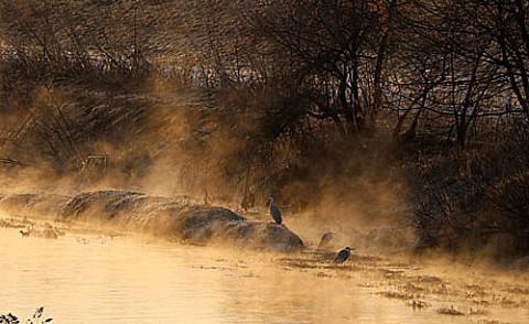 夜明けの川霧とサギ