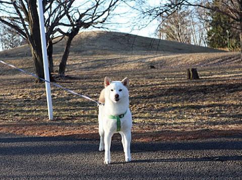 緑ヶ丘でお散歩ワンちゃん