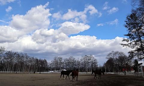 帯広畜産大学の馬牧場