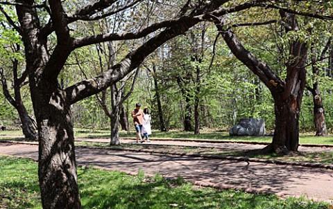 緑ヶ丘の桜まつり