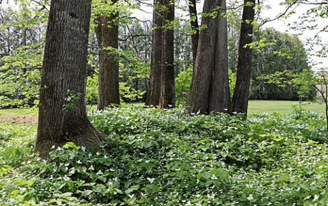 六花の森の新緑と野草
