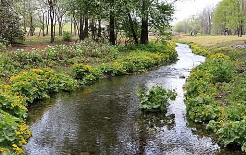 中札内の六花の森で咲く花