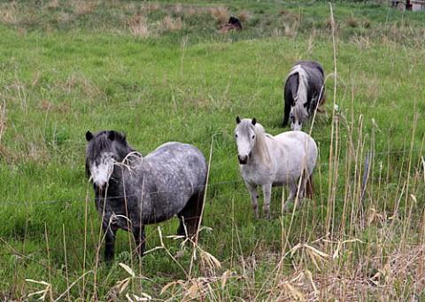 馬が3頭とキタキツネ