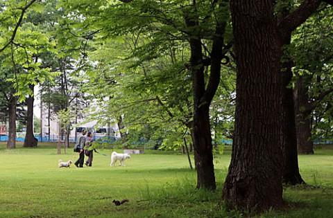 秋田犬との出会いはすずらん公園