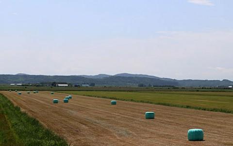 カラフル牧草ロール