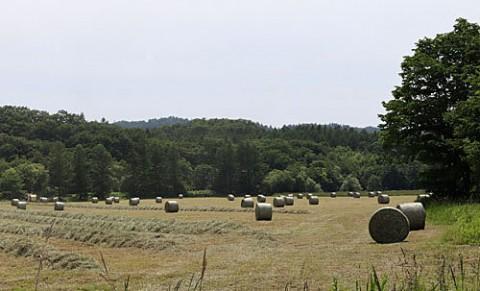 夏の風物詩、牧草ロール