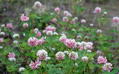 河川敷で咲く花4種