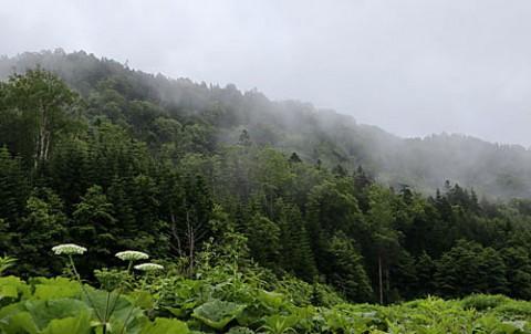 朝は雨霧、午後は青空
