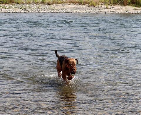 札内川でボール遊び