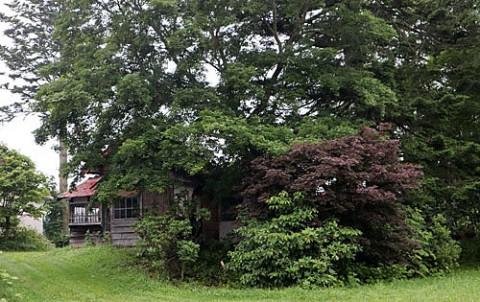 樹木に埋もれる廃屋