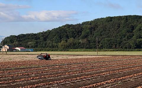 収穫の秋、お天気が続きますように