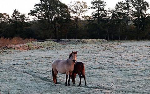 尺別の霜で真っ白な馬牧場