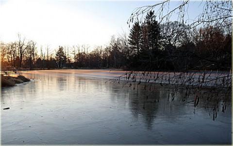 凍った池に射し込む朝陽