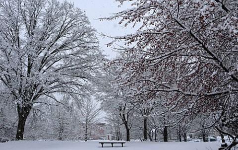 積雪8センチの湿った雪
