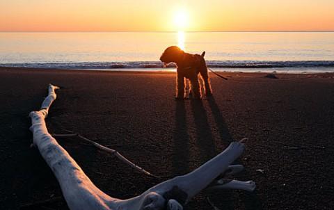 湧洞の朝凪の海で散歩