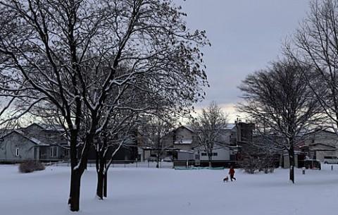 雪の朝のお散歩ワンちゃん