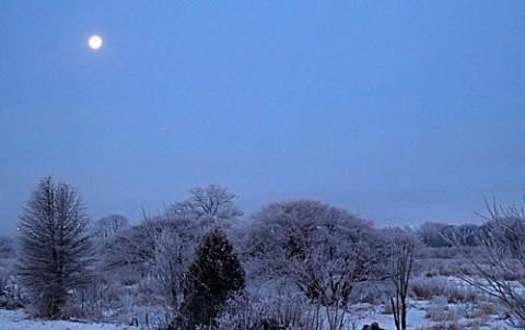 朝の月と霧氷