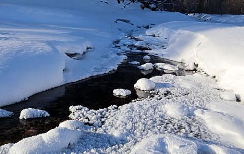 糠平のキノコ氷他自然の造形