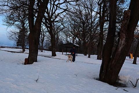 公園散歩のラブちゃん