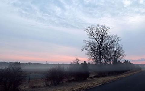 河川敷の朝霧風景