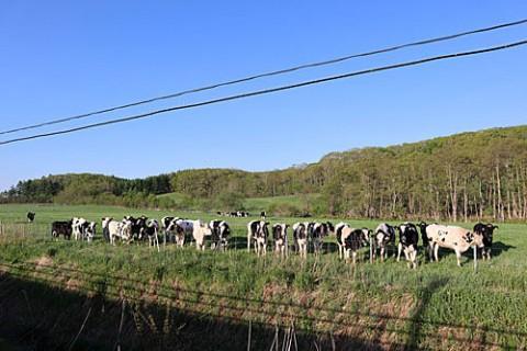 エルの吠える声に集まった若牛