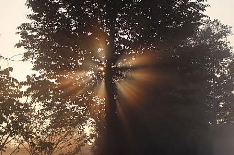 夜明けの朝霧光芒