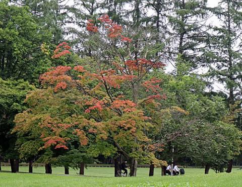 紅葉が始まった緑ヶ丘公園