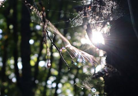 七色に染まる蜘蛛の糸