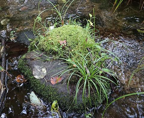 苔の種類は多いです