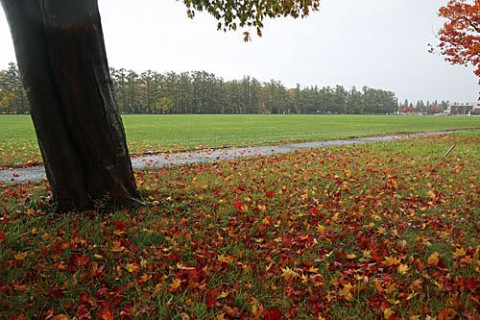 グリンパーク付近の紅葉